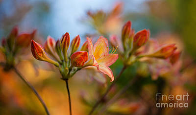 Macro Photograph - Glorious Orange Blooms by Mike Reid