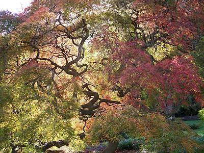 Glorious Tree In The Arboretum Art Print