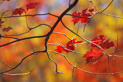Photograph - Glory Of Fall by Eva Kato