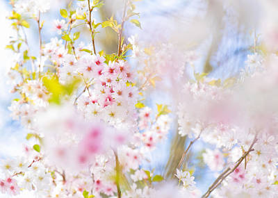Photograph - Glory Of Spring by Sarah-fiona  Helme