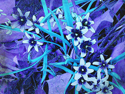 Photograph - Glory Of The Snow - Violet And Turquoise by Shawna Rowe