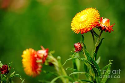 Photograph - Glory by Yew Kwang