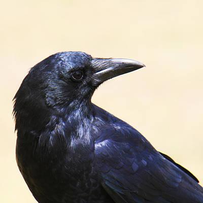 Glossy Crow Art Print by Bob and Jan Shriner