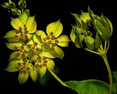 Photograph - Glow by Len Romanick