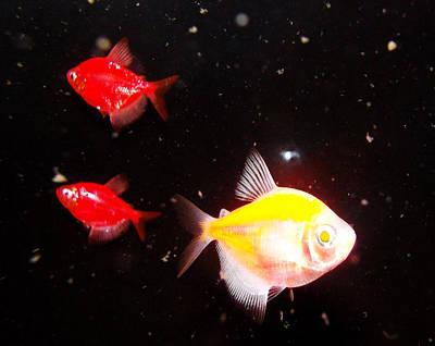 Photograph - Glowfish by Shere Crossman