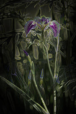 Photograph - Glowing Alaskan Irises by Penny Lisowski