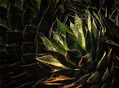 Photograph - Glowing Aloe by Mary Jo Allen