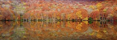 Autumn Foliage Photograph - Glowing Autumn by Sho Shibata