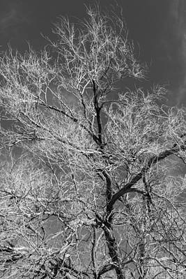 Photograph - Glowing Branches by Denise Dube