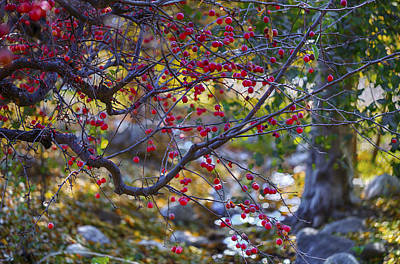 Photograph - Glowing Branches by Scott Campbell
