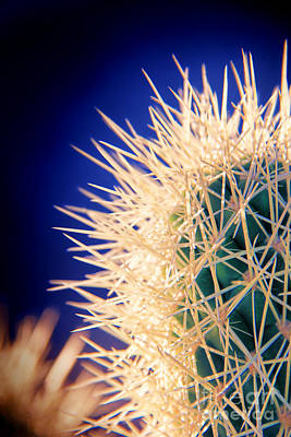 Sun Aura Photograph - Glowing Cactus by Mariola Bitner