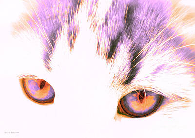 Photograph - Glowing Cat Eyes by Anita Lewis