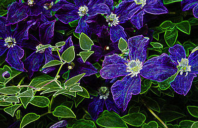Photograph - Glowing Clematis by Penny Lisowski