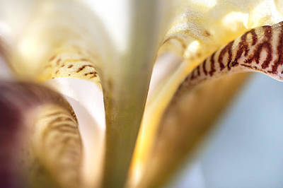 Glowing Details. Macro Iris Series Art Print by Jenny Rainbow