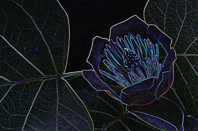Photograph - Glowing Edges by Paul Miller