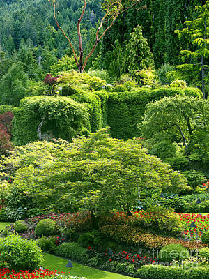 Photograph - Glowing Garden In Vancouver by Brenda Kean