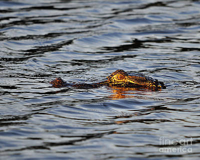 Reptiles Photos - Glowing Gator by Al Powell Photography USA