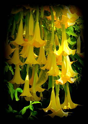 Photograph - Glowing Golden Angel Trumpets by Carla Parris