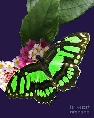 Digital Art - Glowing Green Butterfly Among Flowers by Bill Woodstock