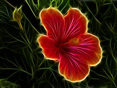 Fractalius Photograph - Glowing Hibiscus by Shane Bechler