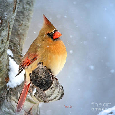 Photograph - Glowing In The Snow by Nava Thompson
