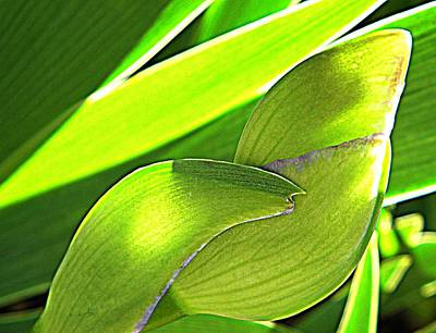 Photograph - Glowing Iris Buds by Chris Berry