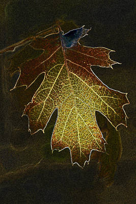 Art Print featuring the photograph Glowing Leaf by Judi Baker