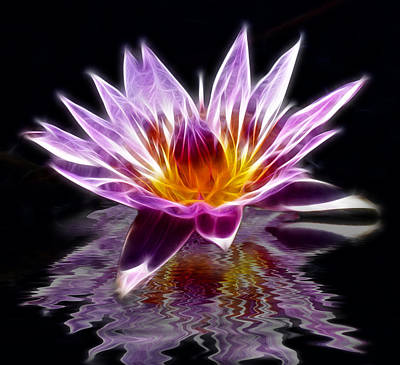 Glowing Lilly Flower Art Print by Shane Bechler