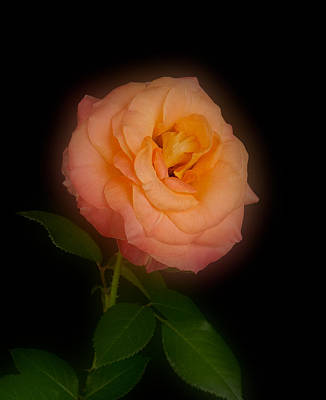 Photograph - Glowing Love And Peace by  Onyonet  Photo Studios