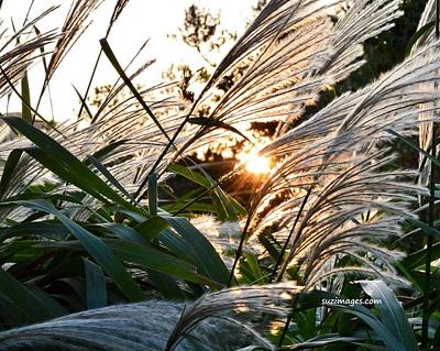 Photograph - Glowing Pampas by Susie Loechler