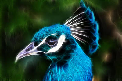 Photograph - Glowing Peacock by Shane Bechler
