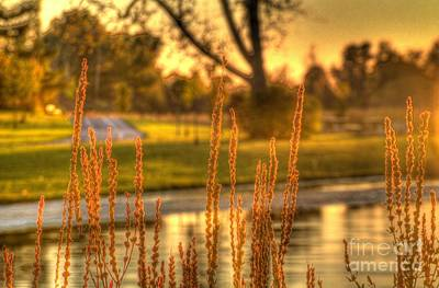 Art Print featuring the photograph Glowing Plants In A Pond by Jim Lepard
