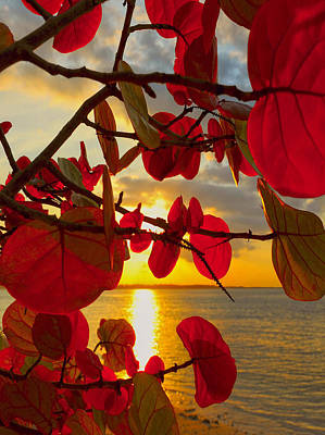 Tropical Photograph - Glowing Red by Stephen Anderson
