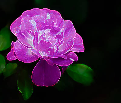 Photograph - Glowing Rose II by Penny Lisowski
