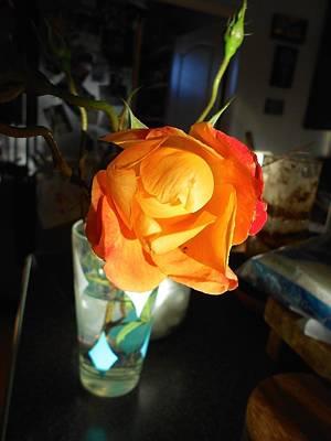Photograph - Glowing Rose by John Norman Stewart