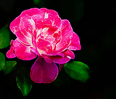 Photograph - Glowing Rose by Penny Lisowski