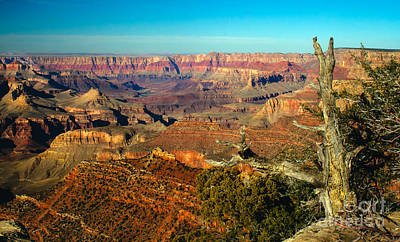 Photograph - Glowing South Rim by Robert Bales
