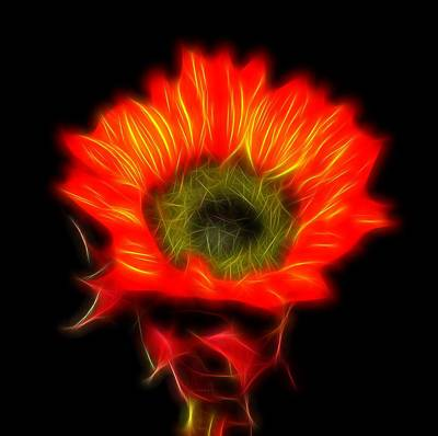 Photograph - Glowing Sunflower by Judy Vincent