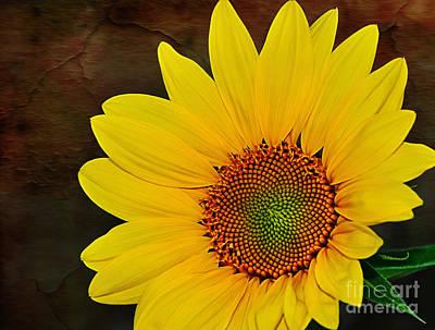 Glowing Sunflower Art Print by Kaye Menner