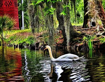 Photograph - Glowing Swan by Judy Vincent