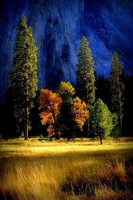 Glowing Trees Art Print