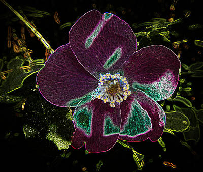Photograph - Glowing Wild Alaskan Rose 3 by Penny Lisowski
