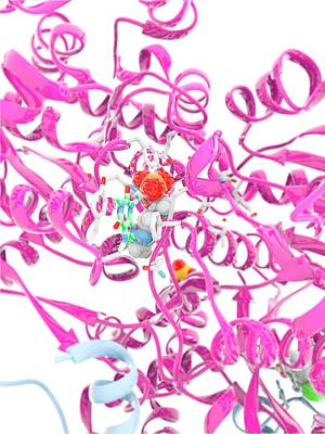 Glycogen Phosphorylase Active Site Art Print by Ramon Andrade 3dciencia