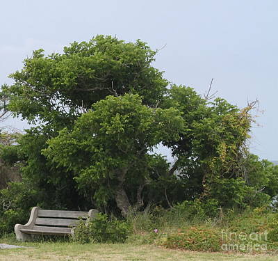 Bench Photograph - Gnarled Tree And Bench by Cathy Lindsey