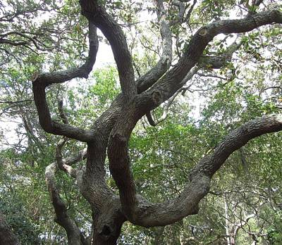 Art Print featuring the photograph Gnarled Tree by Cathy Lindsey