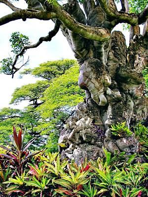 Photograph - Gnarled Tree  by Phyllis Kaltenbach