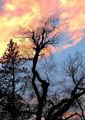 Photograph - Gnarled Tree Silhouette by Will Borden