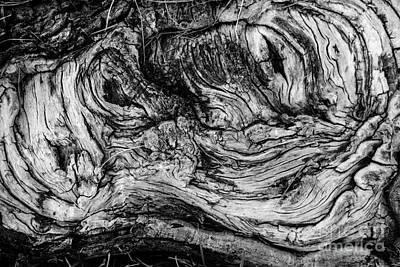 Gnarled Wood Art Print