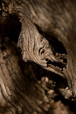 Photograph - Gnarly Knot by Michael McGowan