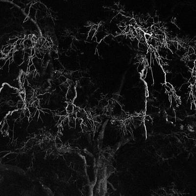Black And White Wall Art - Photograph - Gnarly Night Oak by CML Brown